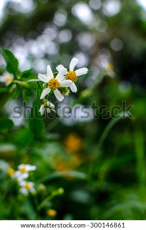 White flowers in the rainy season - stock photo