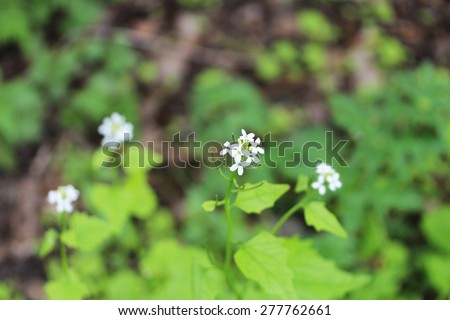 White flowers in the woods close up - stock photo