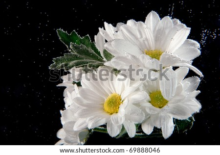 white flowers in water