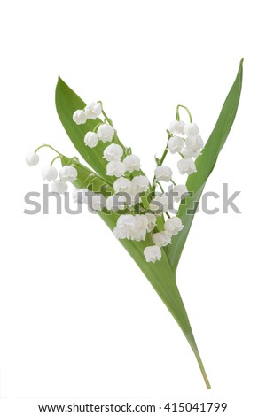 White flowers lilies of the valley isolated on white background.