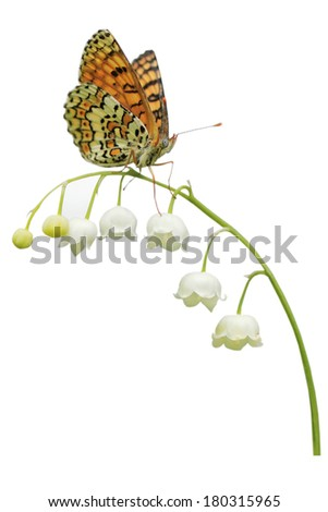 White flowers lilies of the valley isolated on white background with butterfly - stock photo