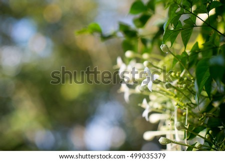 white flowers ,natural background.