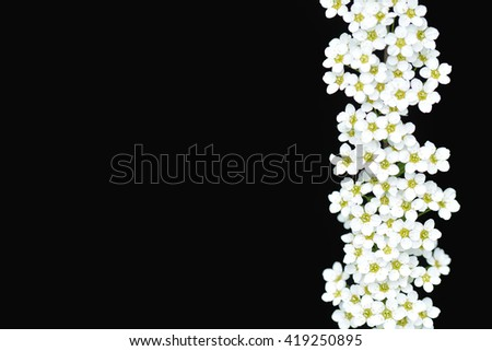 white flowers on a black background - stock photo