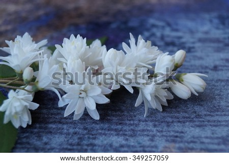 White flowers on a blue background