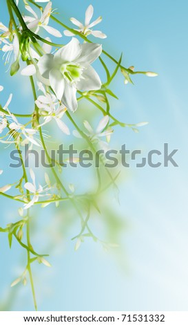 white flowers on blue background - stock photo
