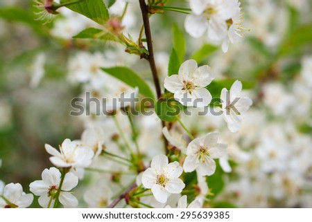 White flowers on branch - stock photo