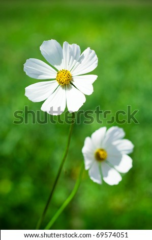 White flowers on the green blur - stock photo