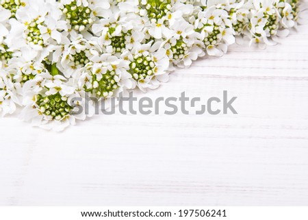 white flowers on white wooden background - stock photo