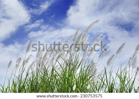 White flowers under blue sky - stock photo
