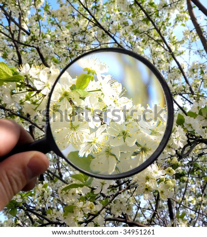 white flowers under magnifying glass in human hand - stock photo