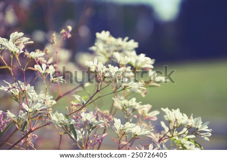 White flowers with warm filter (hipster's style) - stock photo