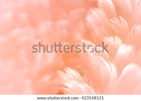 White fluffy feather closeup - pale Orange Ember to Solar Shadow background - Fashion Color Trends Fall Winter 2016 2017 Set 2 - and pinkish orange Carotene color of Spring Summer 2017 - stock photo