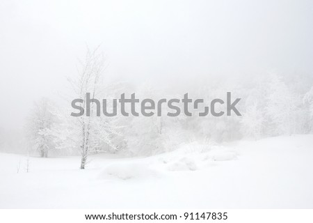 White forest - stock photo