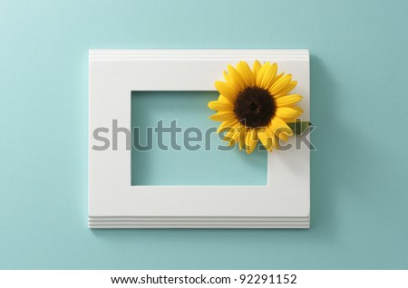 white frame with sunflower on the blue wall - stock photo