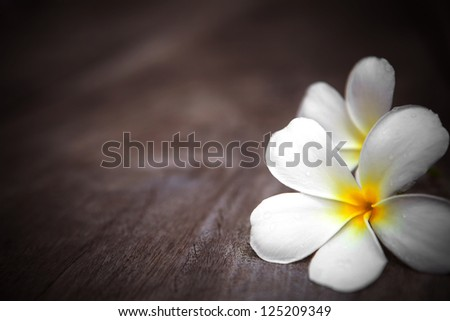 white frangipani flower on wooden background with shallow depth of field - stock photo