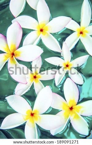 White frangipani spa flowers over shiny water background-5 - stock photo