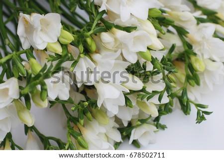 White freesia flower bouquet stock photo edit now shutterstock white freesia flower bouquet mightylinksfo