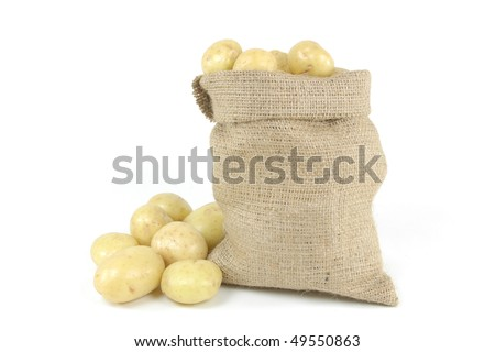 White fresh mini potatoes - picture horizontal orientation. On pile and in burlap bag fresh mini white potatoes - still life picture.