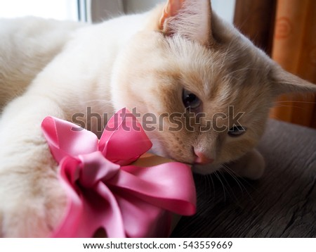 white funny playful young cat playing with a box and a bows, presents