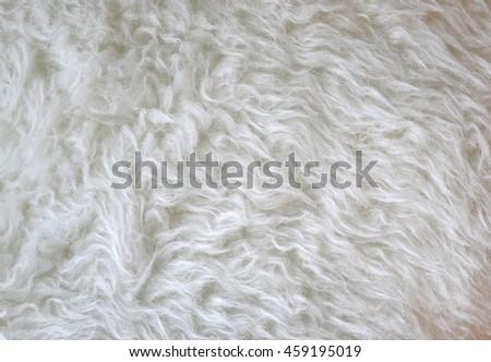 White fur background - stock photo