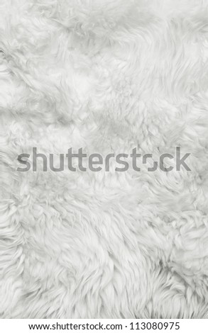 White fur background. Close up - stock photo