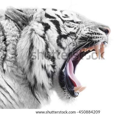 White fury - stock photo