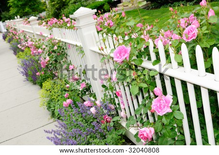 White garden fence with pink roses, salvia (sage), catmint, lady's mantel and more on house entrance - stock photo