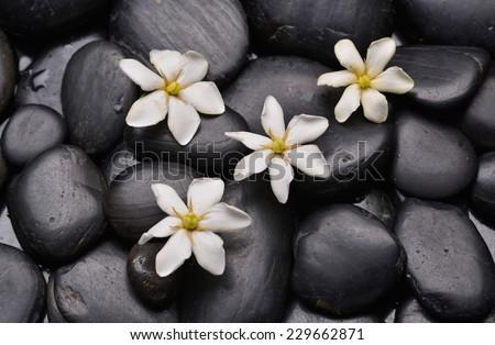 White gardenia on wet pebbles - stock photo
