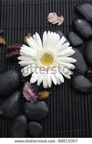 White gerbera flower with flower dried petals and zen stone - stock photo