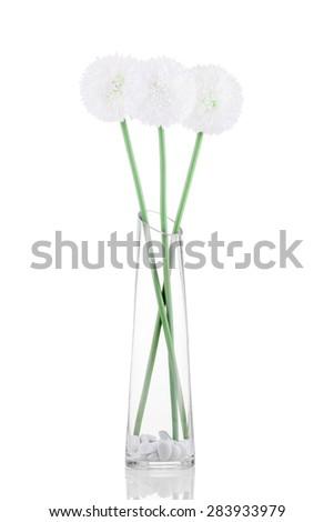 White Giganteum in vase isolated on white background - stock photo