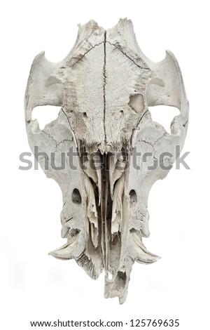 White goat skull isolated on a white background - stock photo