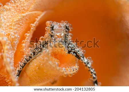White gold diamond ring in Orange rose taken closeup with water drops and bubbles - stock photo
