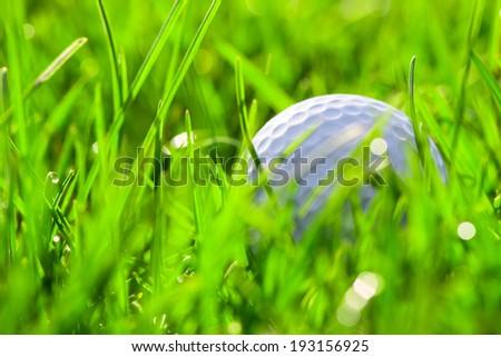 White golf ball on green grass - stock photo
