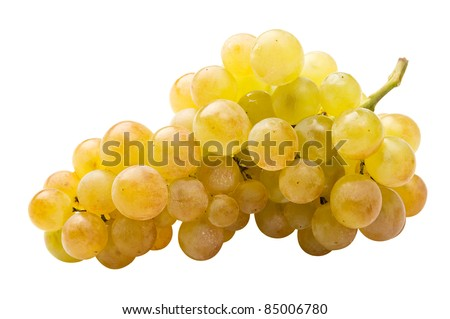 White grape (riesling) fully isolated - stock photo