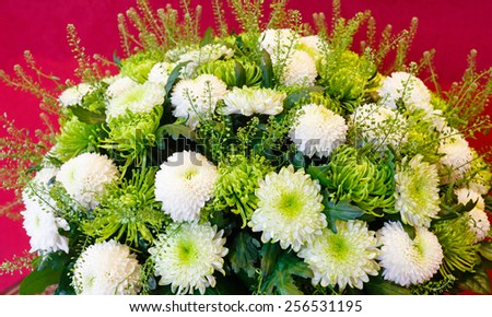 White - green chrysanthemum summer flowers bouquet on red - stock photo