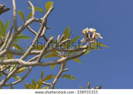 White&green color of flowers in blue sky.