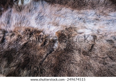 White Grey, Dark Brown Wolf Fox Fur Natural, Animal Wildlife Concept and Style for Background, textures and wallpaper. / Close up Full Frame. - stock photo