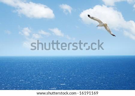 white gull flying - stock photo