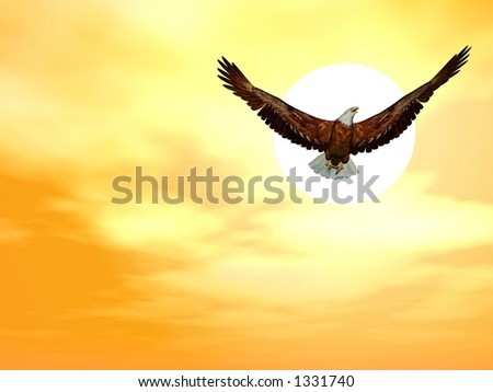 white-head eagle - stock photo