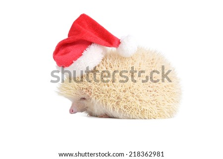 White hedgehog wearing red santa hat on white background. - stock photo
