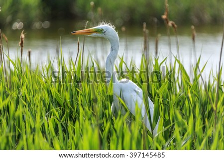 White heron chick sitting in the nest - stock photo