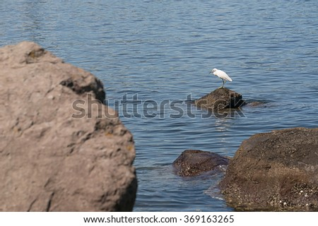 White heron standing on a rock in Tokyo