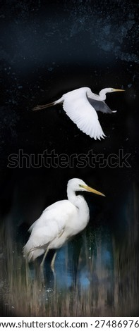 White herons before dark background,illustration - stock photo