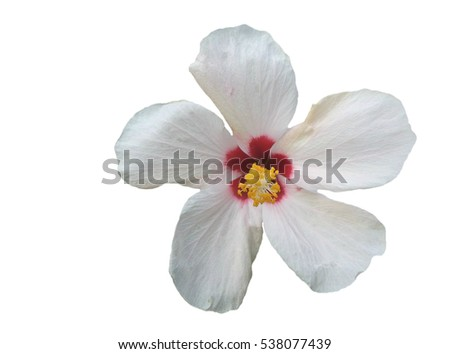 White Hibiscus Flower On White Background, Selective Focus