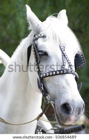 White Horse - stock photo