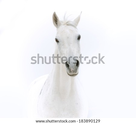 white horse - stock photo