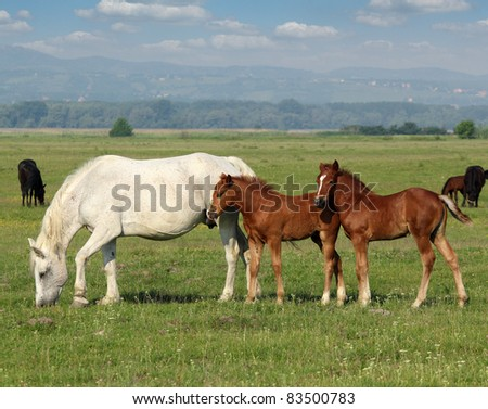 white horse and brown foals in pasture