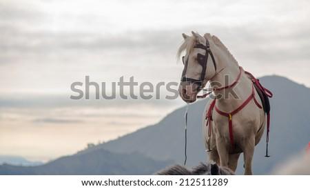 White horse at Mt. Bromo - stock photo