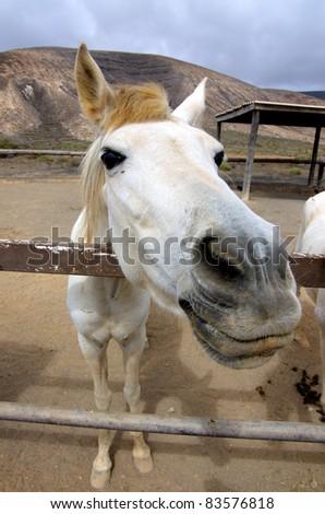 White horse at the farm - stock photo