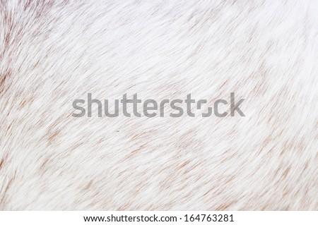 white horse fur - stock photo